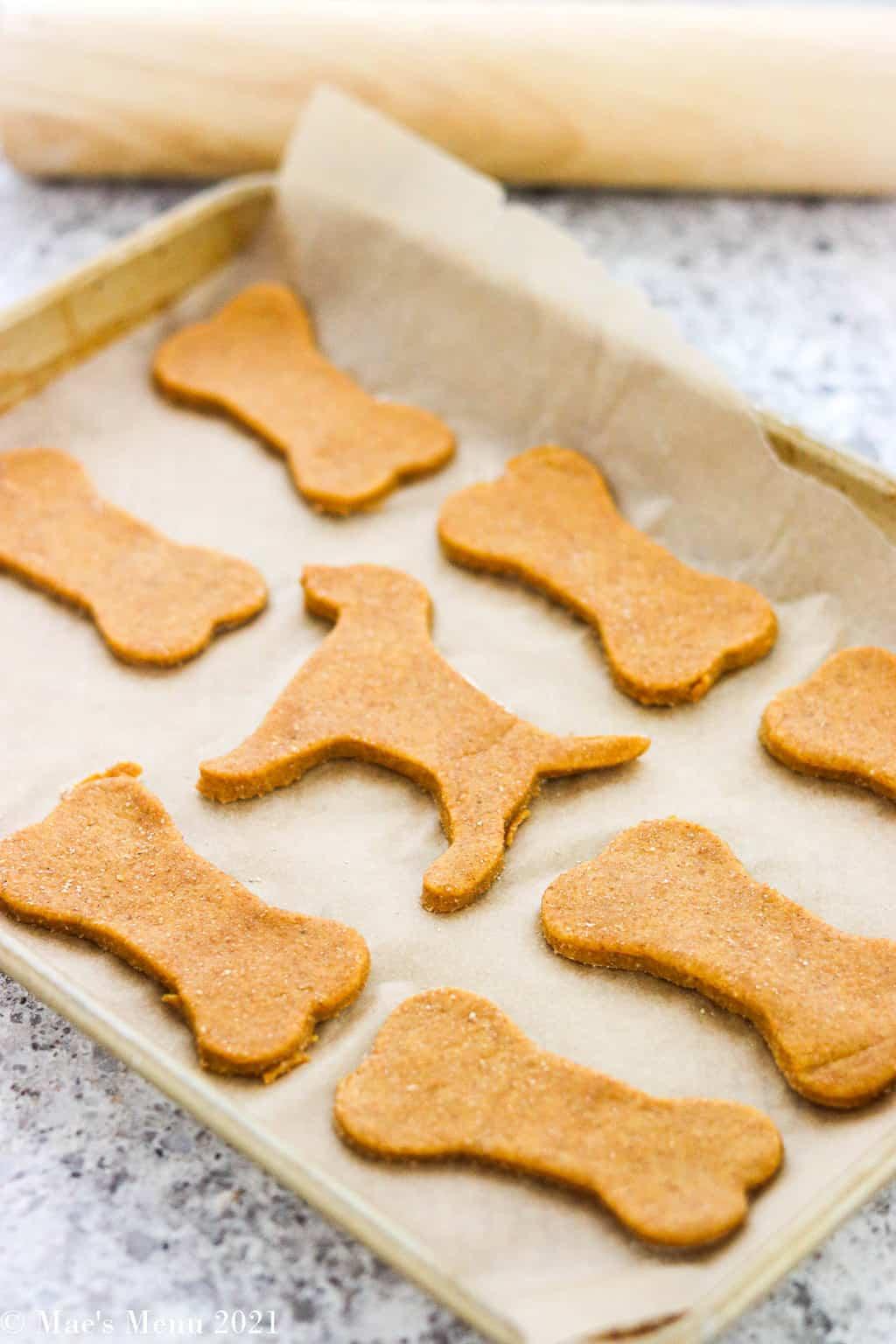 an up-close angled shot of peanut butter pumpkin dog treats on a baking sheet