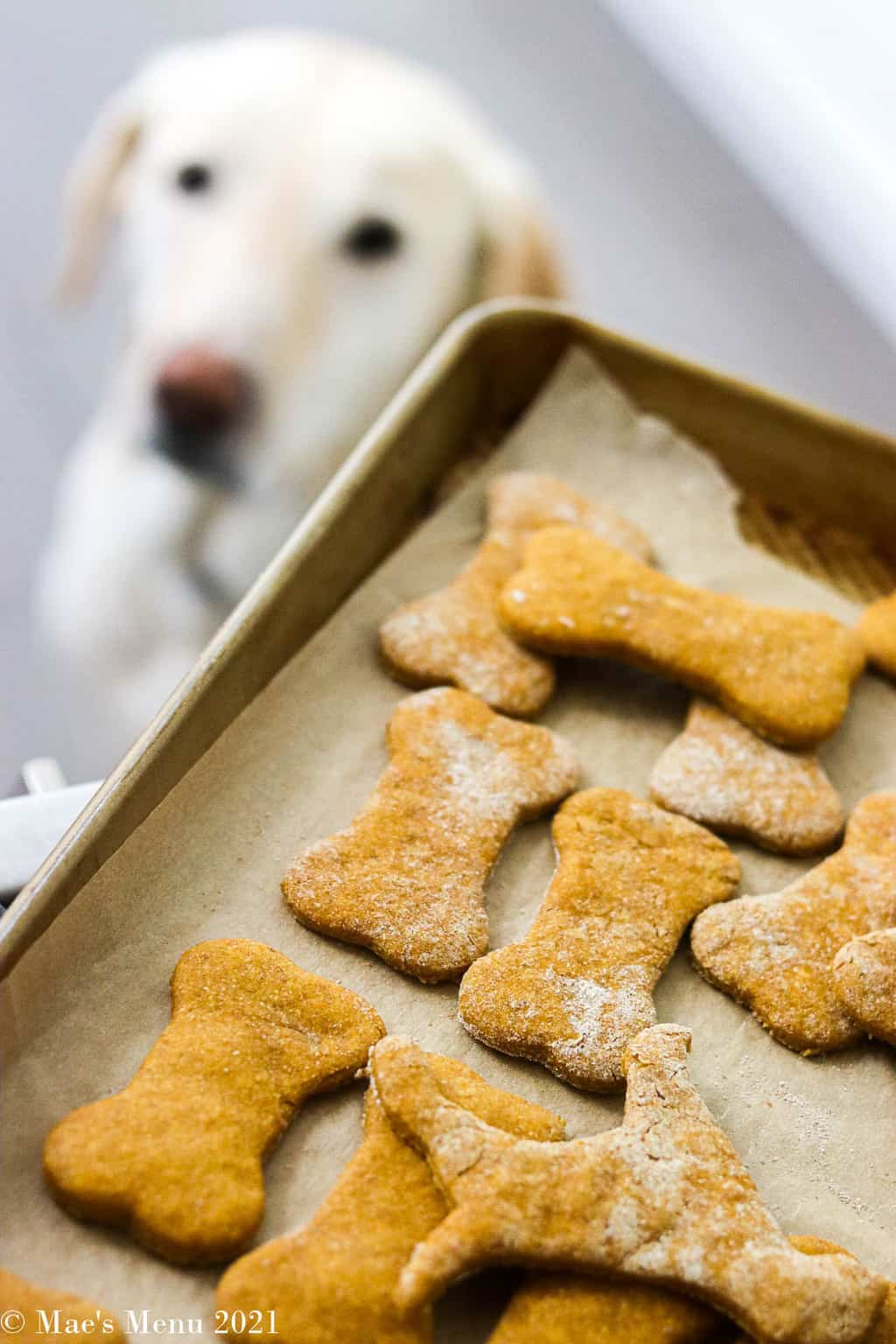 a tray of dog treats with a dog staring at them in the background