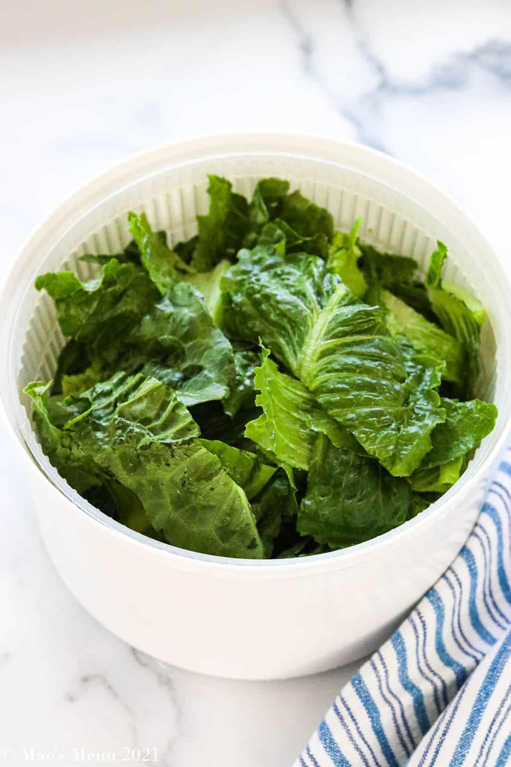 A salad spinner full of romaine lettuce